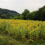 Landschaften_022